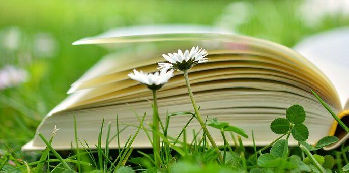 book-2304389__340.jpg